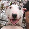 笑うのは人間ばかりじゃない・意外に深いその真実 ~ 犬の笑顔と笑い顔(その1)~