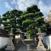広島県尾道市 七佛めぐり 天寧寺で御朱印とお守りブレス念珠をいただきました。