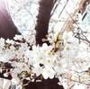 3/25じまんの会〜コレクションの巻