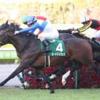 12/1(日)の阪神競馬場のレース予想 ~勝負は12Rで!!~
