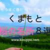 【熊本県】桜の名所8選♡もうすぐ春だ!桜だ!