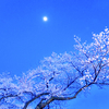 しばらくは花の上なる月夜かな