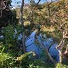 大和御前之宮の池(仮称)(和歌山県和歌山)