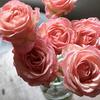 薔薇の香りにふれる