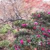湘南探訪「鎌倉・一条恵観山荘と浄妙寺の紅葉を楽しむ」