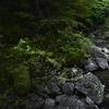 大阪で唯一の日本の滝百選『箕面大滝』