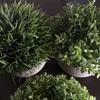【意外】Amazonで「ヤバそうな観葉植物」を購入した結果...かなりオススメの商品だった!
