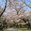 桜の名所 弘法山ハイキング 2018.4.1
