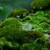 水の森 絵本の中の、とても優しくあたたかい、深い森。