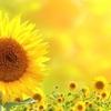統合エネルギー療法・ハンズオンヒーリング/体験談
