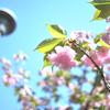 Nikonのデジイチ「D3000」で2017年4月24日までに撮影した写真です。テントウムシ(幼虫)が大量にいてグロかったです