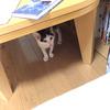 ひとり暮らしの家に猫が来た
