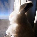 ホッキョクウサギ日誌