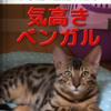 猫の日( *´艸`)