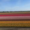 チューリップ咲き誇るキューケンホフ公園