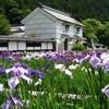 加茂荘花鳥園と富士花鳥園に出没!花菖蒲と紫陽花の競演