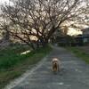 犬を通して知る宇宙(わたし)