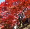曼殊院  寛永文化の結晶 京都の歴史を立体的に理解する方法