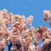 337. 花盛り