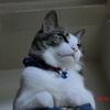 肘というか踵?おネコさま。