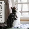 猫用語 ~多頭飼い~