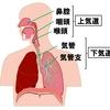 【基礎から学ぶ】呼吸器(概要)【解剖生理学】