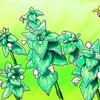 地味な草にも花が咲く