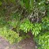 木からぶら下がる糸の先には白黒の謎の小さな繭