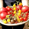 【イベント】toricafe✕長九郎農園《トマト料理を、農家と、シェフと。〜「おいしい。」の再発見〜》開催!【コラボ】