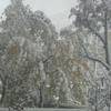 雪 きました〜