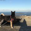 朝熊山から神島ビュー