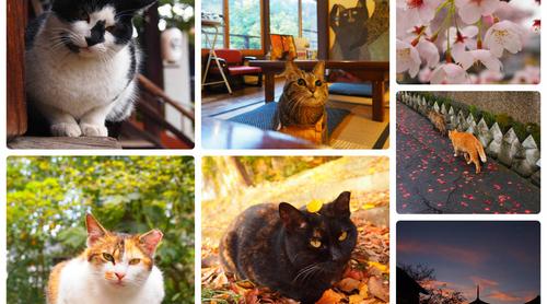 猫好きにはたまらない!かわいすぎる京都の猫スポット