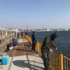 磯子海釣り施設 釣果