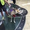 エアポートのセラピー犬