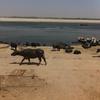 【インド】バラナシでガンジス川を拝む編