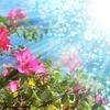 LIVE~花と海~ やるよーっ(」・∀・)」