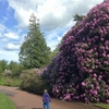今日の散歩:Royal Botanic Garden Edinburgh