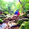 島を冒険してみよう!〜西表島旅行で人気の観光アクティビティSUP体験
