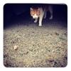 背中が肉離れで痛いのに頑張って歩いていたら茶白の猫と再び会えたよ