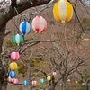 お花見準備が進む函館公園…