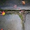 母と一緒に… 観福寺の紅葉見物と、亀?