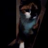人懐っこい近所の野良猫「三色丼」