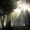 バイブル・エッセイ(893)信仰の光