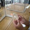 微生物拮抗試験にチャレンジ③(結果を観察)
