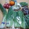 サンドベジ「春の野菜セット」を食べチョクでお取り寄せしたよ【山口県】