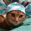 猫ハゲる ⑪ ~カラダを洗ってあげました~