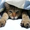 猫と寝るために生きてる