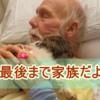 【老犬ホーム】自宅で犬と猫の介護施設を計画中!