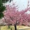 ストレス解消は毎日の散歩。初春の花が癒してくれる。