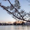 Snapshot ~『桜 2021』 #13